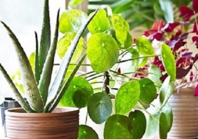 Indoor plants: the mysterious gems !
