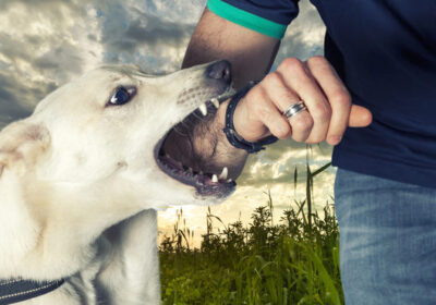 How to choose a Dog Attack Attorney